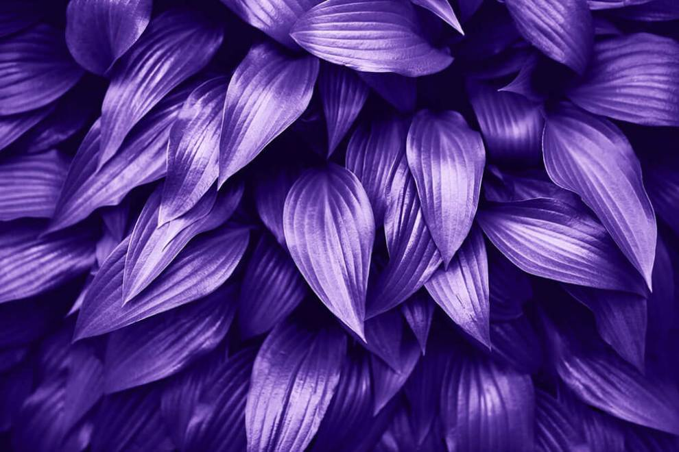 Pantone announces Ultra Violet as Their 2018 Colour of the Year