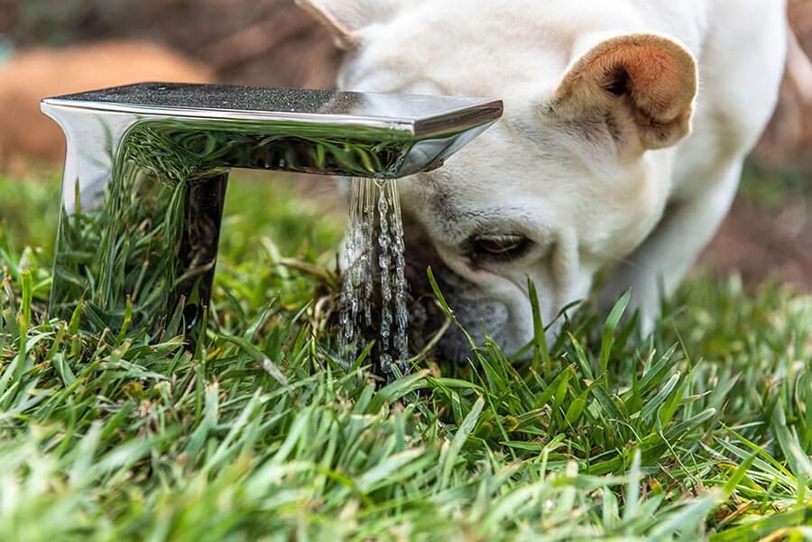 Eco-friendly dog house design boasts impressive features