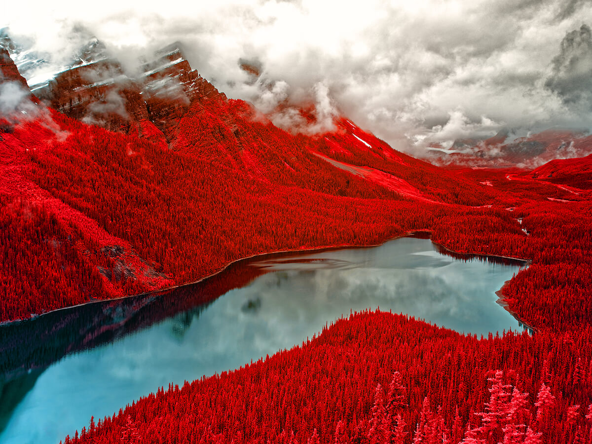 Spectacular winners of the 1st annual infrared photography contest