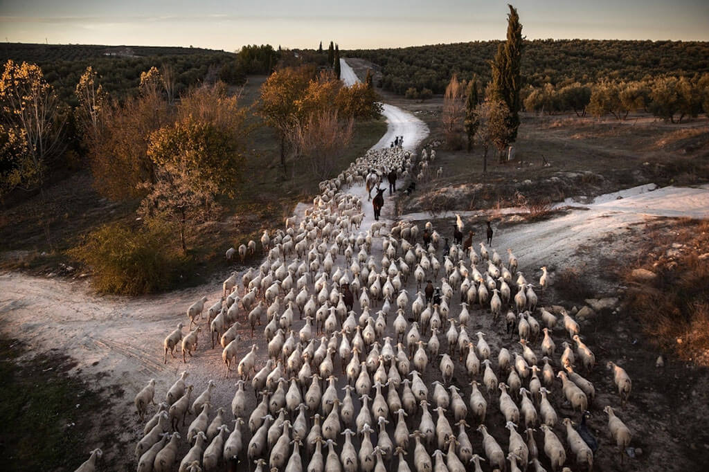"""Transhumance in Spain"""