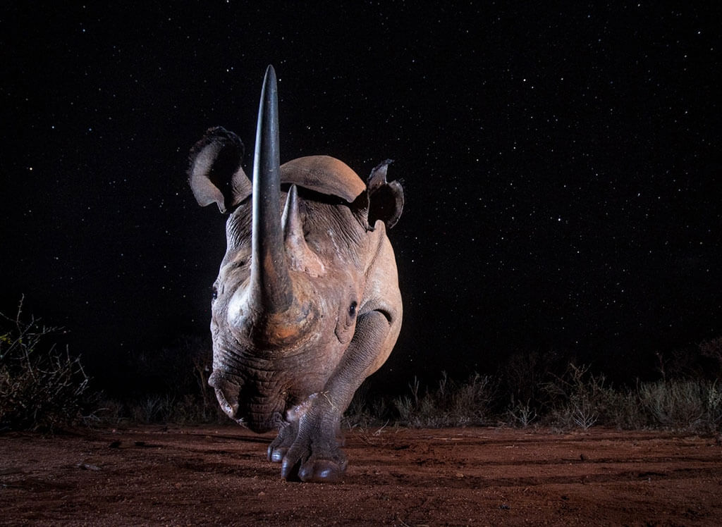 "SIPA: ""Black Rhino at Night"""