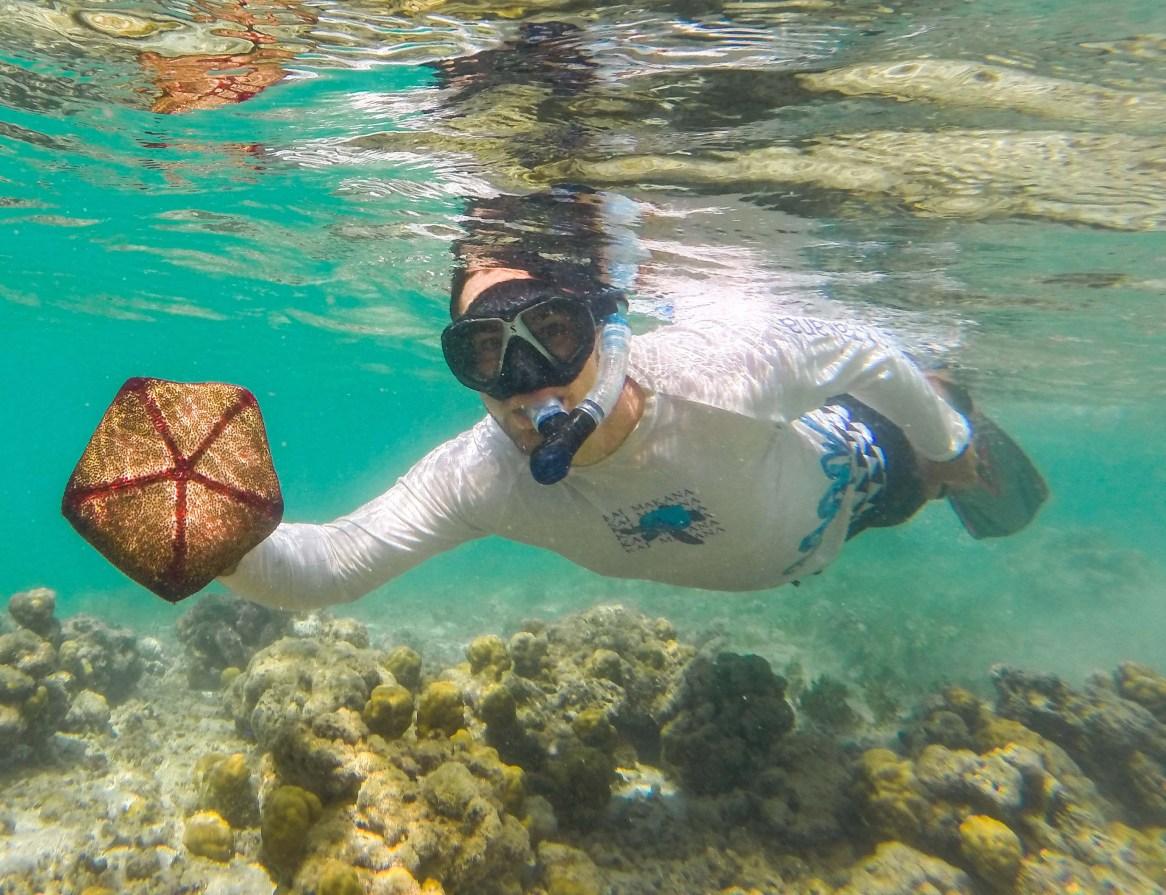 Starfish in American Samoa