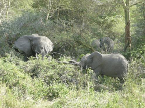 Julia Ember travel photos - elephants