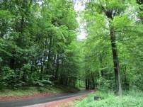Nørremarken Forest