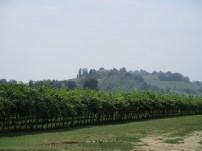 Chiarli Orchard