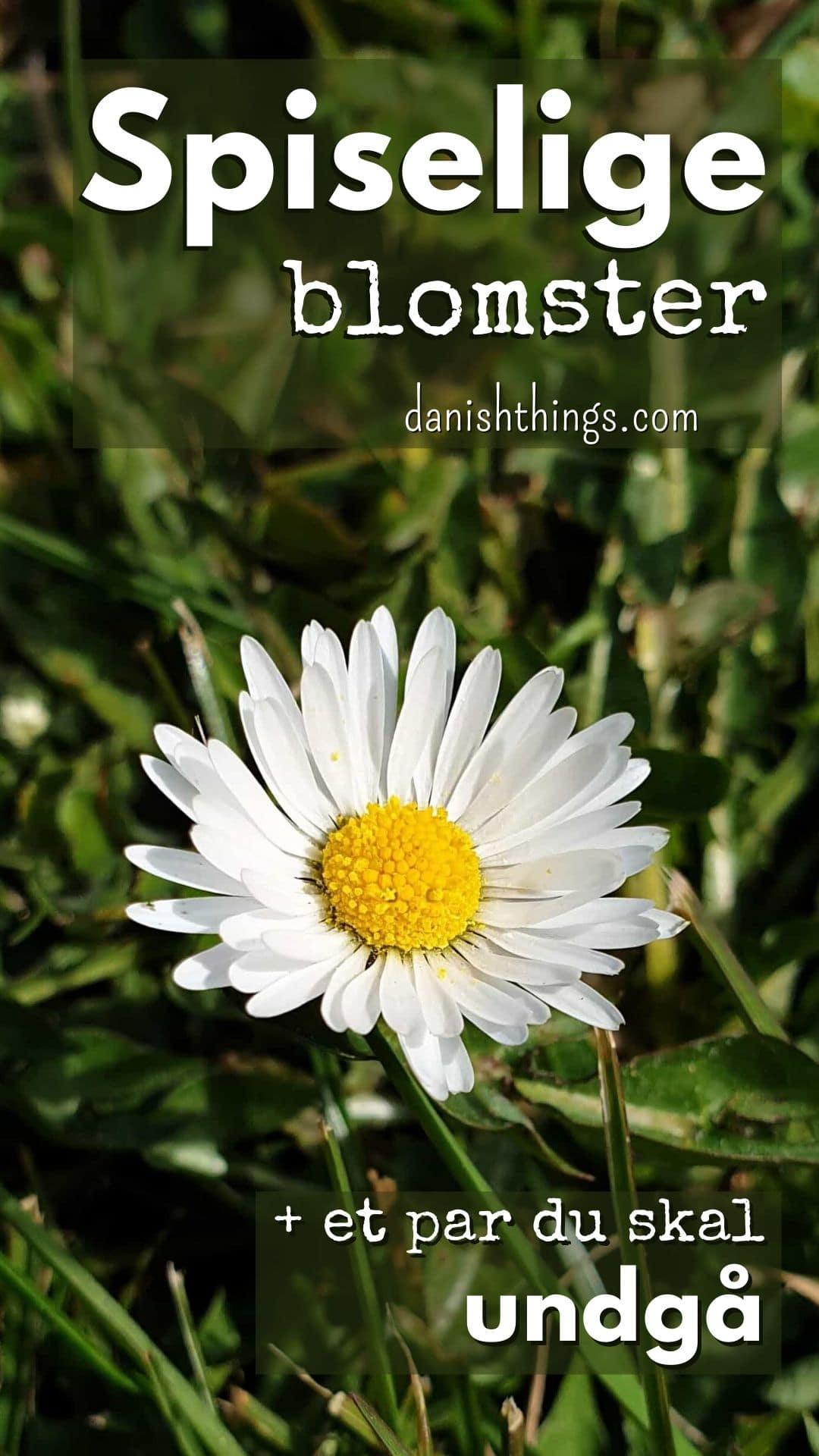 Spiselige blomster, stauder og urter – find de mange spiselige favoritter, 3 du skal spise med måde og et par giftige, som måske overrasker. Få inspiration til brug, tips, opskrifter med de forskellige blomster og find inspiration til årets gang på danishthings.com. #danishthings #blomster #spiselige #giftige #spis-med-måde #undgå #dekoration #spiselige-blomster #spiselige-stauder #det-salte-køkken #det-søde-køkken