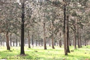 1480 פרחים ועצים, הגליל התחתון, ישראל