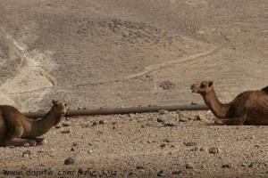 2227 בעלי חיים, מדבר יהודה, ישראל