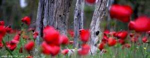 268 פרחים ועצים, הנגב, ישראל
