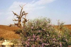 283 פרחים ועצים, מצפה רמון, ישראל