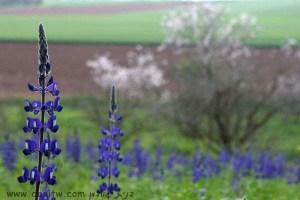 3034 פרחים ועצים, עמק יזרעאל, ישראל
