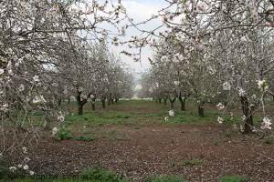 3044 פרחים ועצים, עמק יזרעאל, ישראל