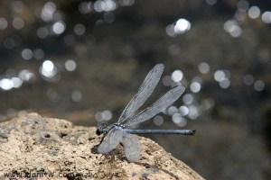 3121 בעלי חיים, רמת הגולן, ישראל