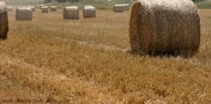 3159 שדות, השפלה, ישראל