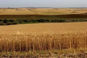 3168 שדות, השפלה, ישראל