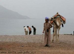 3390 חיות, אנשים, מצרים