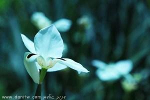 5035 פרחים ועצים, זכרון יעקב, ישראל