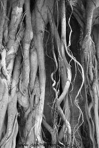 5036 שחור לבן, פרחים ועצים, זכרון יעקב, ישראל