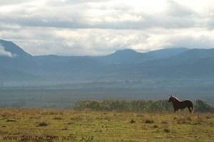 תמונות יפות למכירה צילום בעלי חיים, רומניה 5083