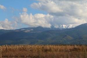 5086 שדות, רומניה