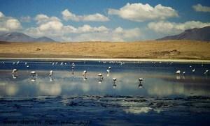 תמונות יפות למכירה צילום בעלי חיים, בוליביה 5154