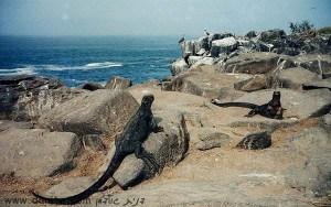 תמונות יפות למכירה צילום בעלי חיים, אקוודור 5187
