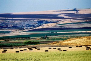 8 שדות, עמק המעיינות, ישראל