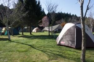 函館白石公園キャンプ場のフリーサイトの様子