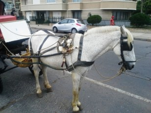 This horse and carriage includes a poop bag.