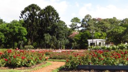 The rose garden. Behind it there´s a pond with swans and paddle boats.