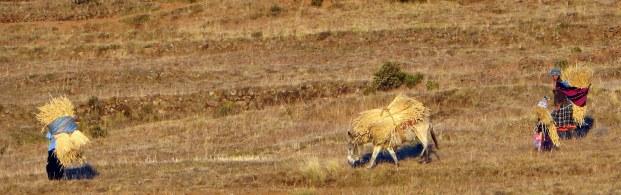 Burrow carrying grass