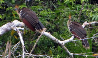 We watched these two old (prehistoric) birds for a long time