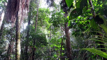Jungle canopy. Most of our jungle hikes looked like this.