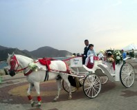 Horse and carriage for a wedding - Santa Marta. They have style!