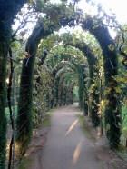 Granada - Alhambra garden