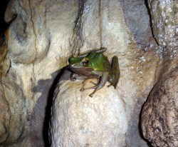 A toad who lives in the dark inside a cave - our lights did not seem to bother him at all