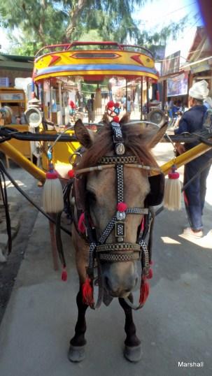 Horse cart, Gili Trawangan