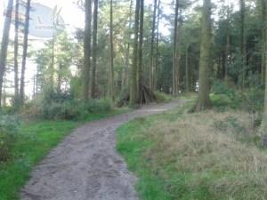 Trail path.