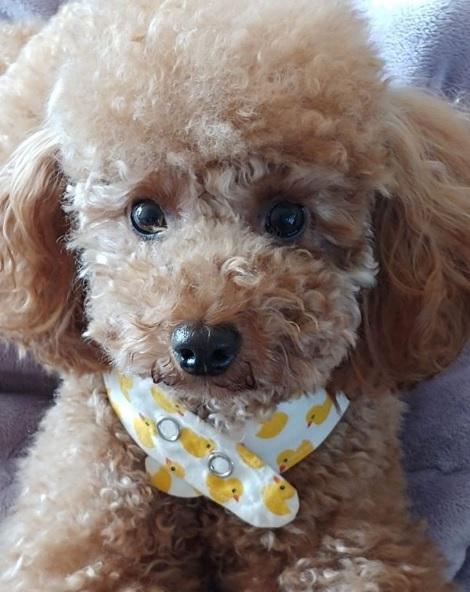 K-POP界で有名なBTS(防弾少年団)SUGA(ミン・ユンギ)の愛犬ホリー