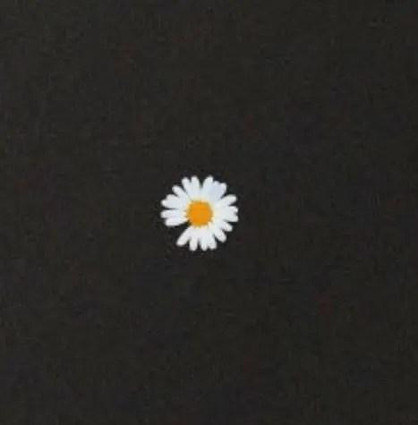 デイジーの花にはどんな意味が隠されている