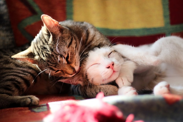 Katzen / Cats - Tierprints / Animal Prints