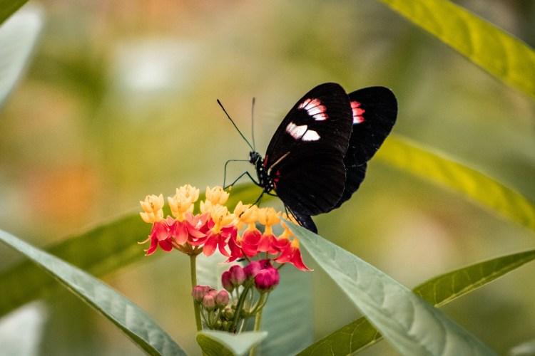 Schmetterling / Butterfly - Tierprints / Animal Prints
