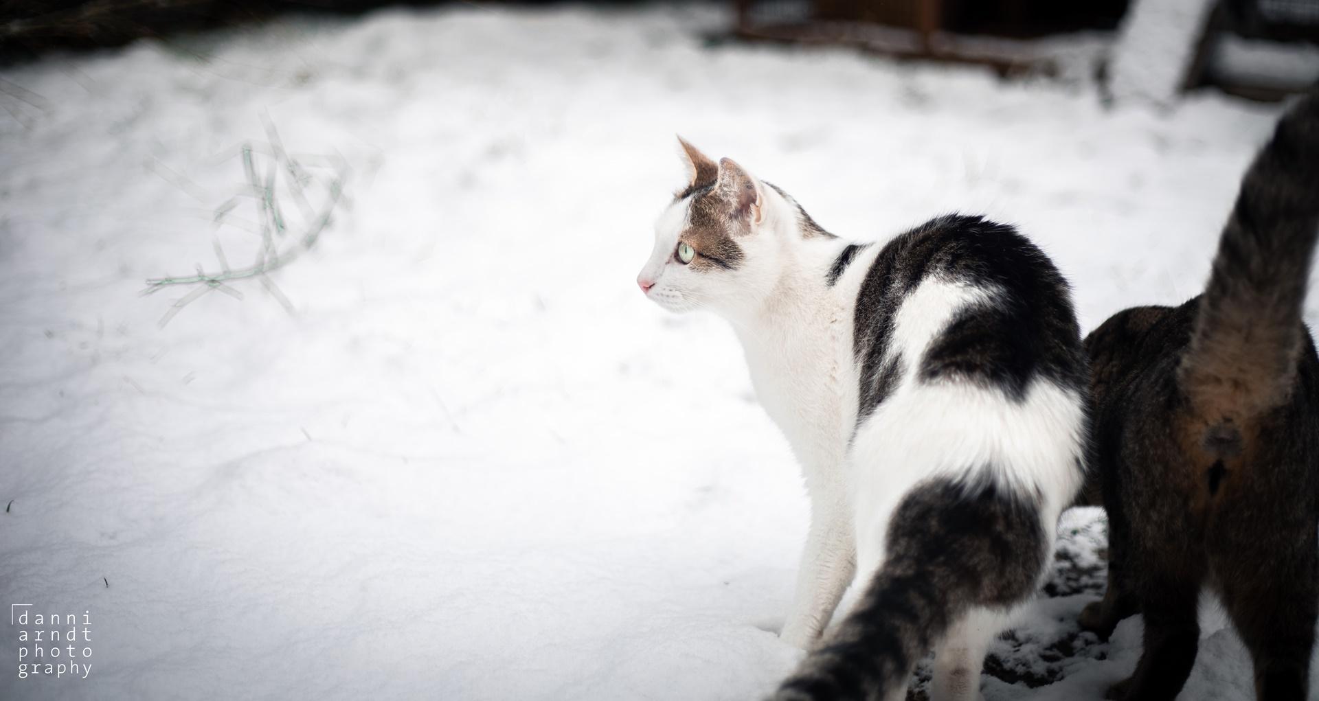 Tomcat snow