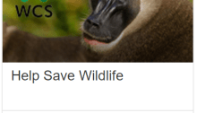 swagbucks wildlife offer