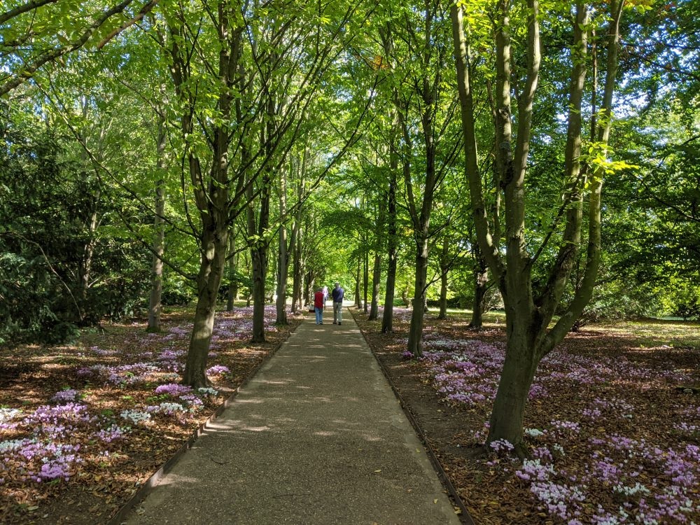Anglesey Abbey trees and path