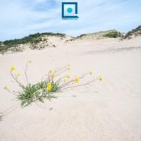 De duinen van Ter Yde