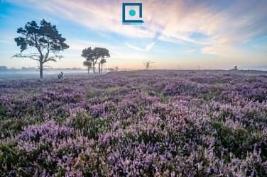 Lightroom panorama & HDR: pro