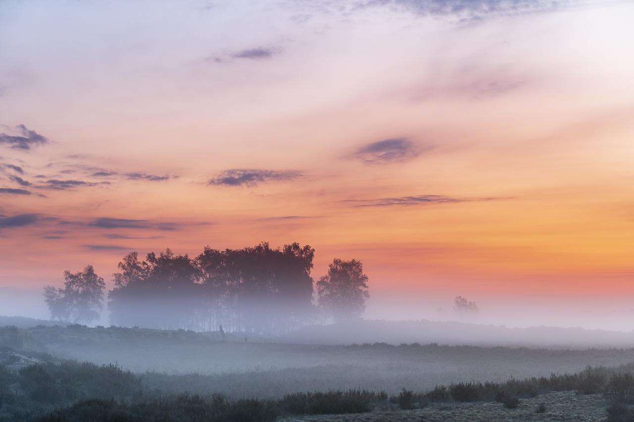 Fotolocatie: Kalmthoutse Heide, rondom uitkijktoren De Stapper
