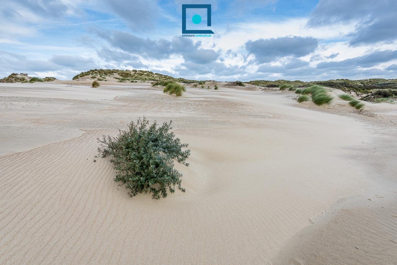 Duinlandschap bij wind, langs de Belgische Westkust.