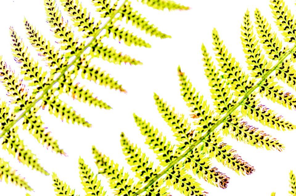 Herfst, Peerdsbos, groen, bruin, sepia, presets, %.